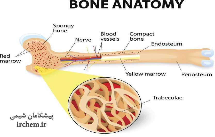 استخوان ها