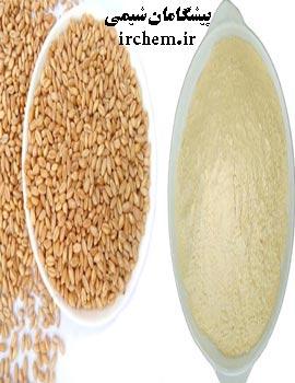 خرید پروتئین جوانه گندم هیدرولیز شده