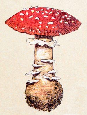 کاربرد قارچ در لوازم آرایشی
