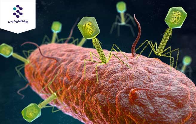 ترکیبات ضد میکروبی طبیعی