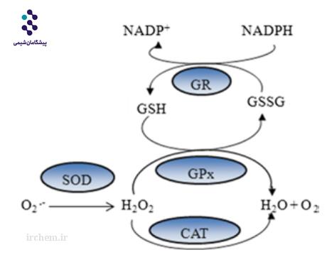 آنتی اکسیدان طبیعی